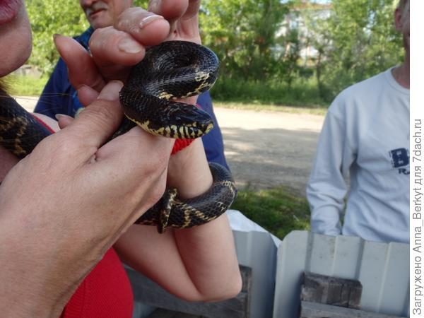 я со змейкой