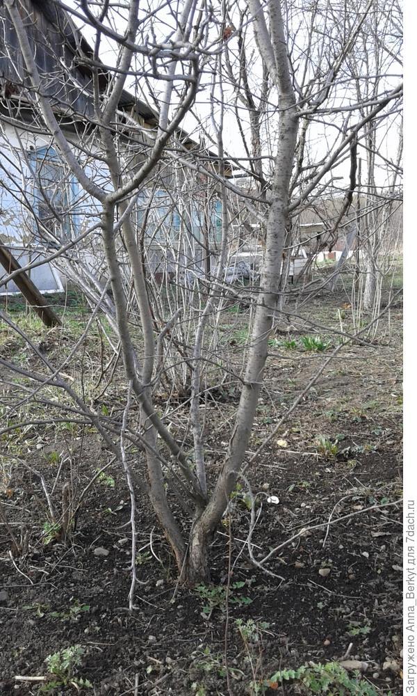 2. здесь это деревце отдельно, более крупным планом