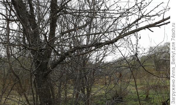 4. тоже с противоположной стороны, боковая ветвь в средней части