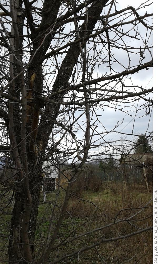 11. с той же стороны вид, левая сторона ветвей