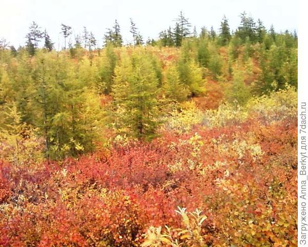 Полыхающее золото осени