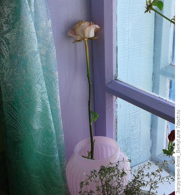 Роза в вазе на окне
