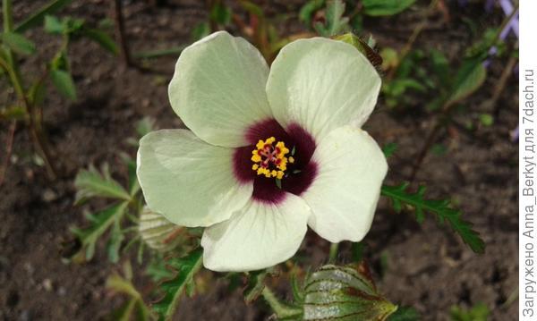 оказался такой милый цветочек