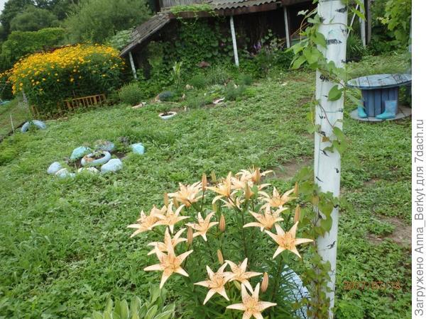 а возле столбика я прошлым летом накидала семена полевого вьюнка