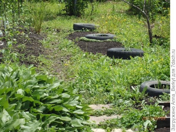 а дальше веранды вдоль дорожки с правой стороны прошлым летом были заросли
