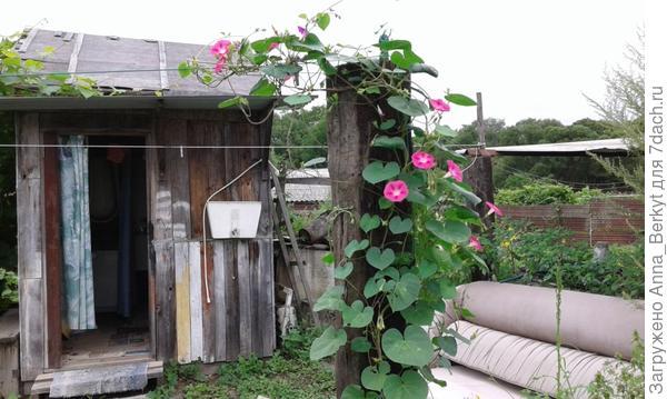 напротив душевого домика неприглядный столб и я решила его украсить