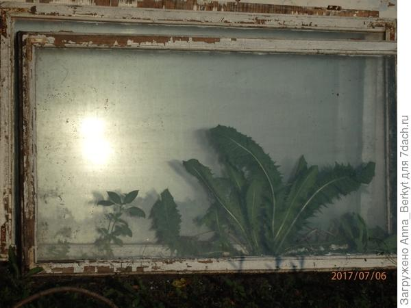за домом я поставила возле стены рамы... меж них выросла трава