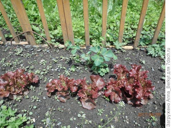 в этот маленький цветочный ряд возле виноградника