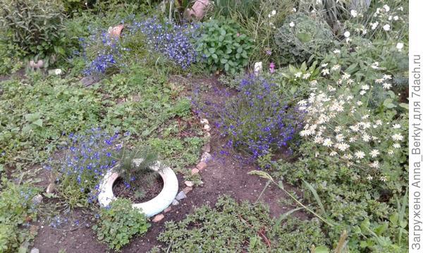 Лобелия цветёт сине-голубыми островками