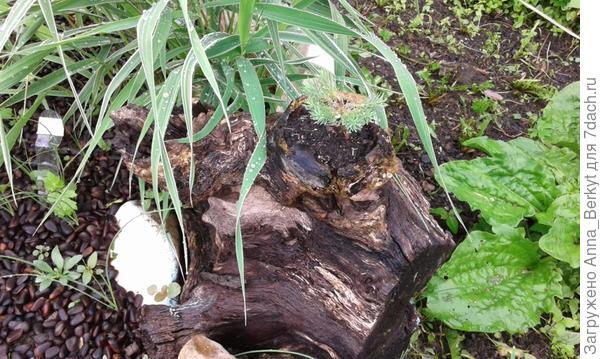 декоративная травка в коряжке