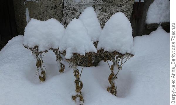 Гномики в зимних шапочках :)