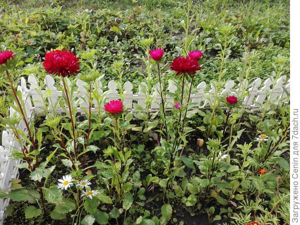 Цветы красные)