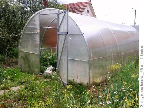 В теплице растут помидоры и перчики