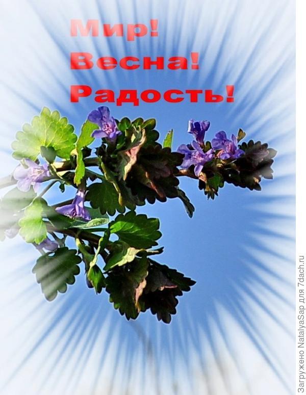 С солнечным Первомаем!