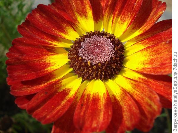 вот такой весёлый цветок!