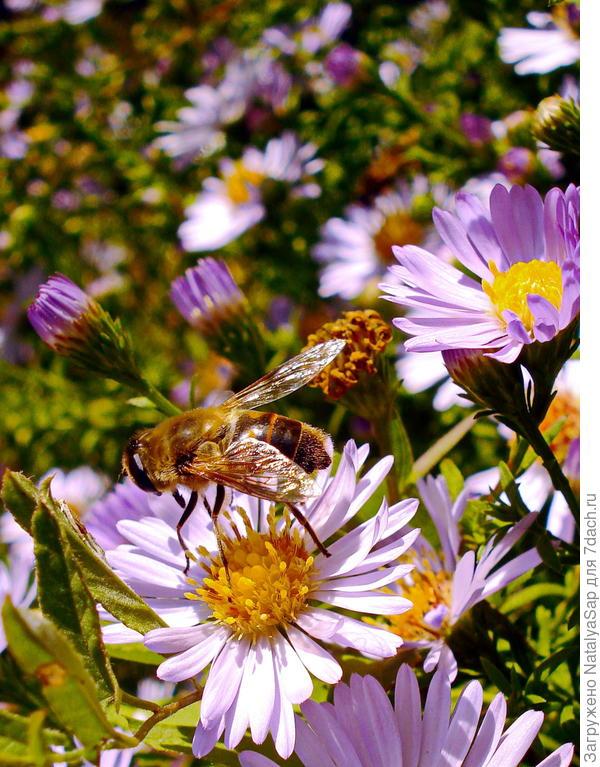 маленький пчелодром