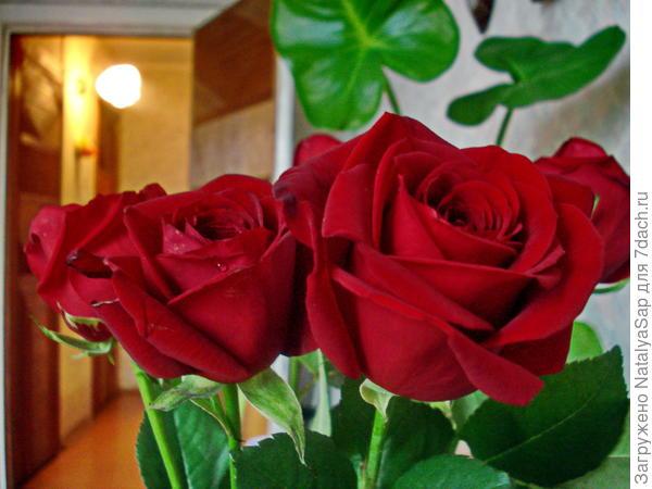 розы победительницам!