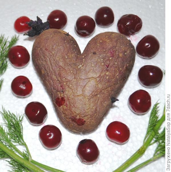 Вот такую <em>сердечную</em> картофелину нашли в прошлогоднем урожае