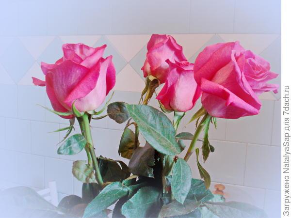 Розовые розы всем победителям