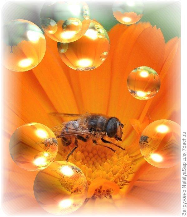 Жаркое лето рабочей пчелы