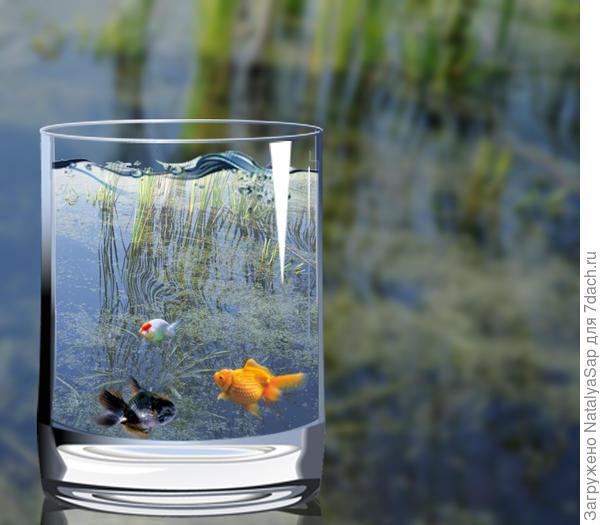 Рыбки в стакане