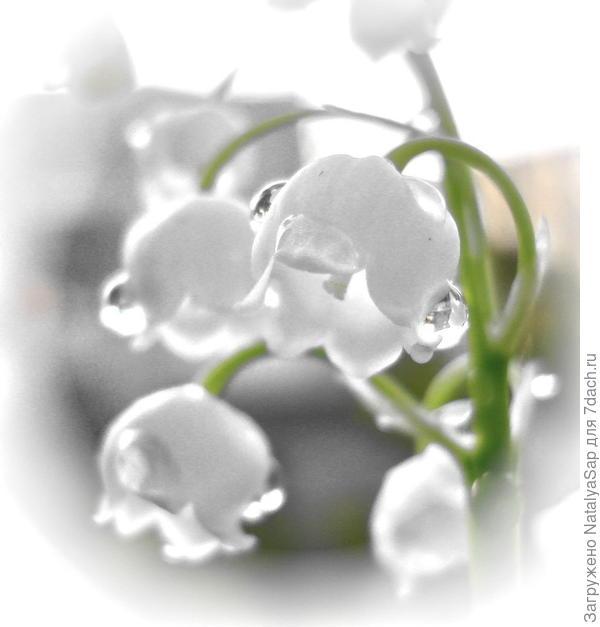 Слёзы весны