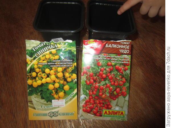 мои первые томаты