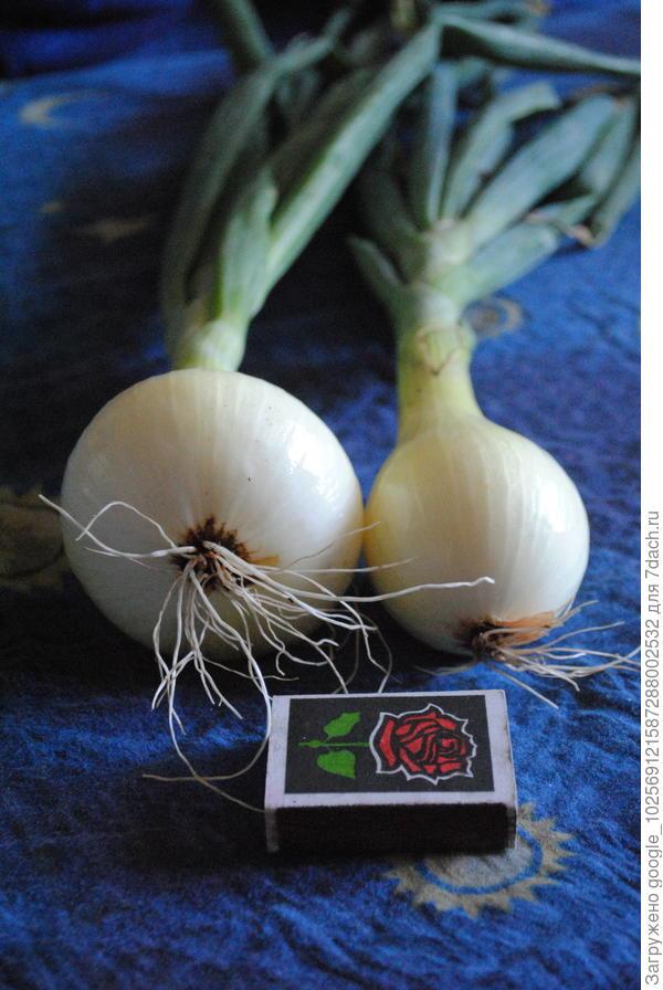 Купить лук блочный лук классический лук традиционный в