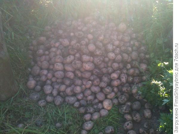 Немножко картошки
