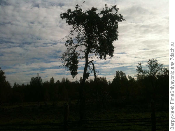 Сломанная ветка у яблони
