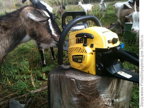 Новая бензопила Champion 254-18 и козы