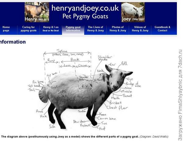 Сайт Давида Уоттса, посвященный жизни двух козлов