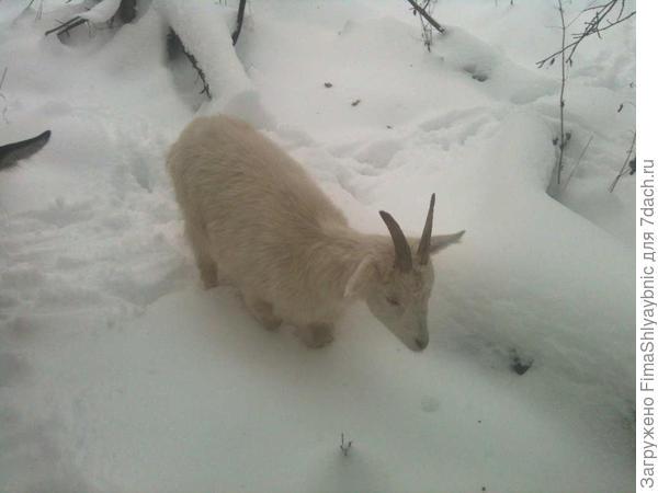 Двадцатая ищет траву. Для нее первый в жизни снег.