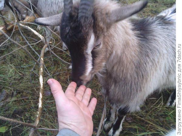 Фляга нюхает мою руку. Она пахнет человеком.