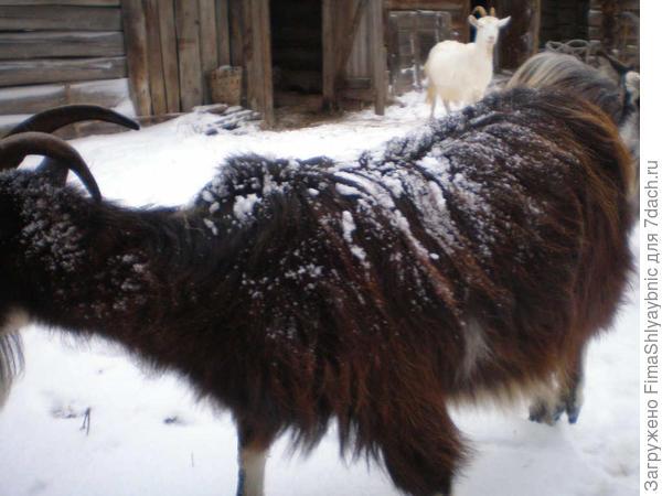 Машка вся обсыпана снегом с сосенок