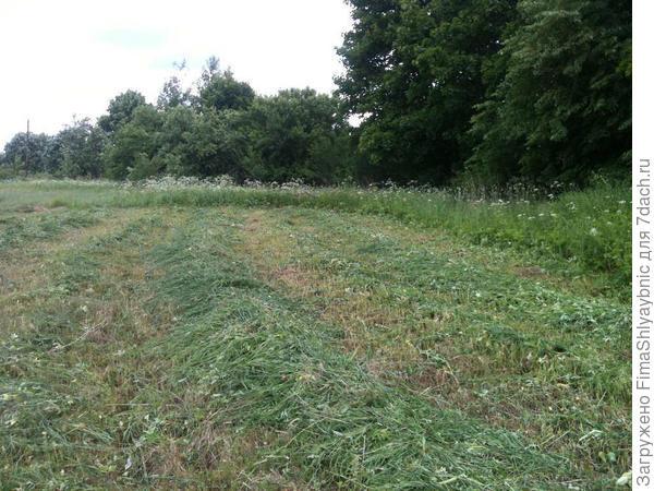 Трава скошена возле болота