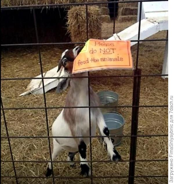 "На плакате: ""Не кормите пожалуйста животное"". Фото из сообщества Goaturday - The Official Community в Google+"