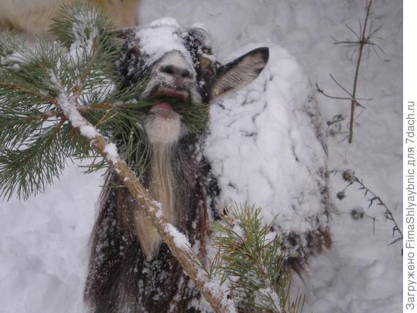 Дашка и снег- особенности климата