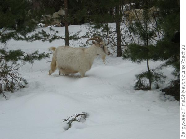 Большая Белка штурмует снега