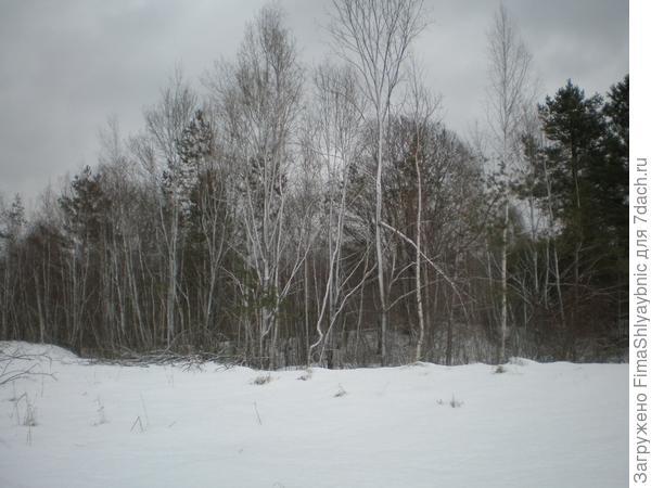 Деревья и снег