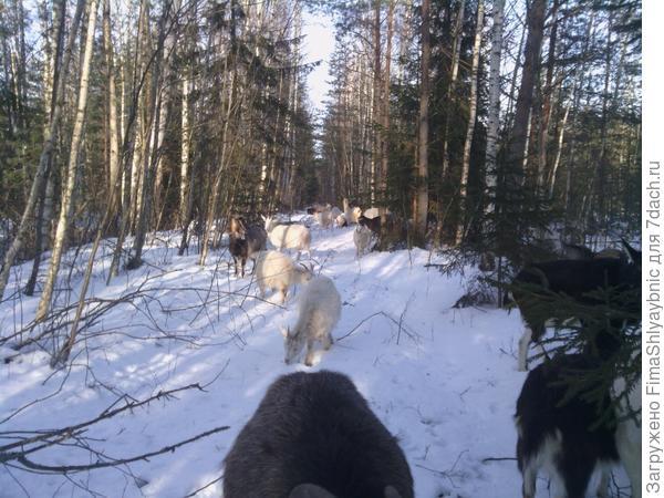 Очень старая дорога в зимнем лесу, слева чувствуется ров