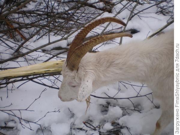 Маруся и ее рога