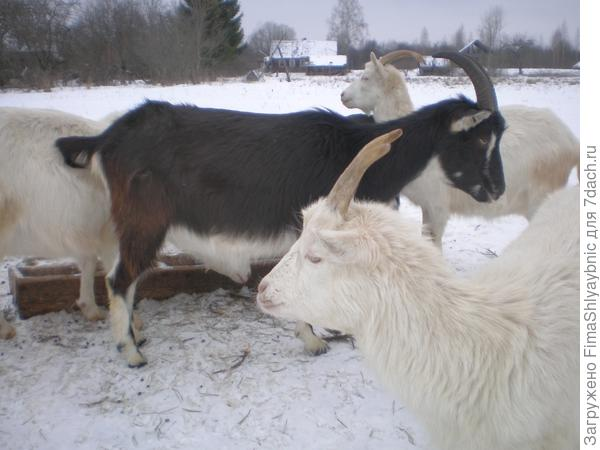 Зимой возле кормушки