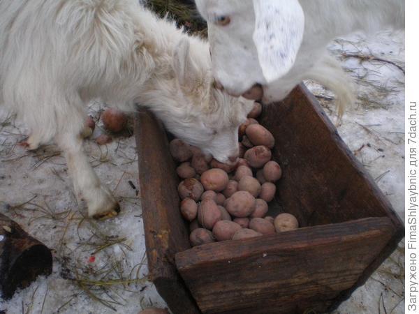 Кормушка с картошкой