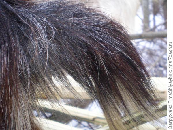 Небольшой козий хвост, у лисы гораздо красивее