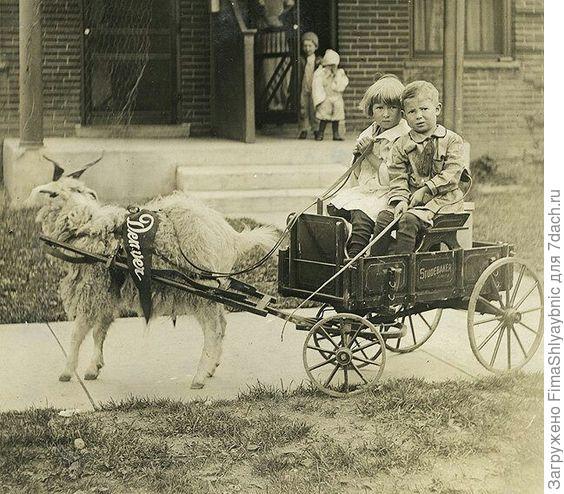 Девочка едет в повозке, в которую впряжен козел. Фото с сайта pinimg.com
