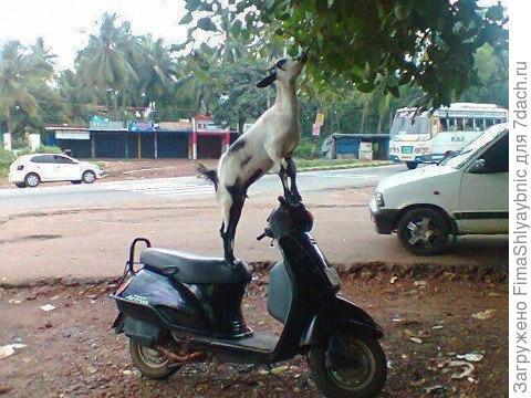 Персональный скутер. Фото с сайта jroo.me