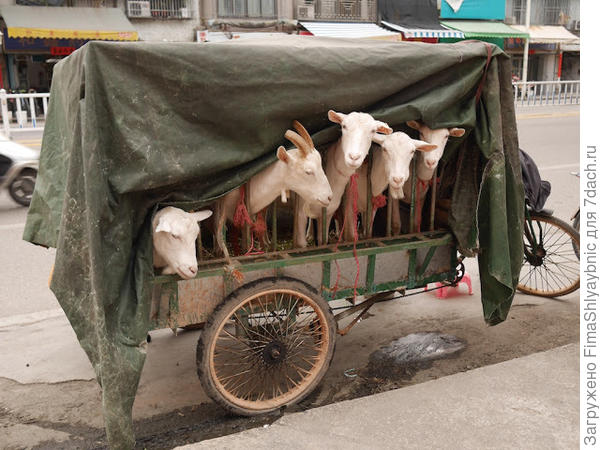 В путешествие! Фото с сайта googleusercontent.com