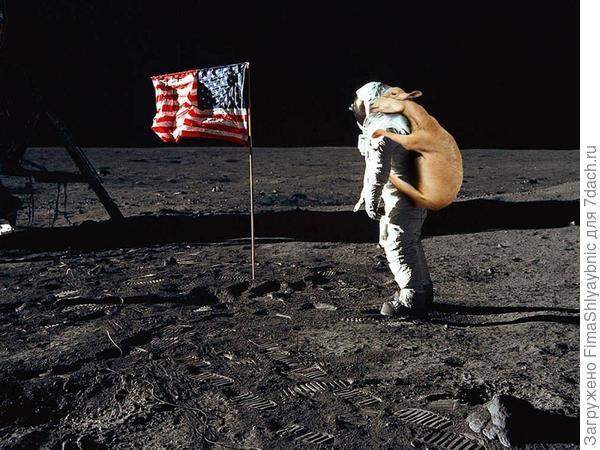Первые козы на Луне. Фото с сайта imgur.com
