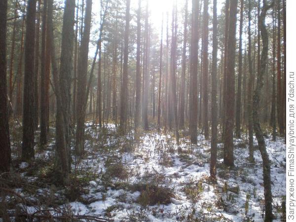 Солнечный лес и болото